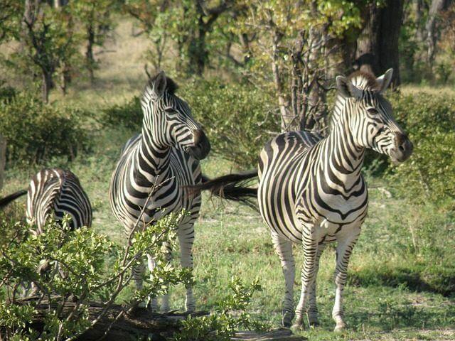 Botswana Reisebericht: Urlaubserlebnisse im Okavango Delta.
