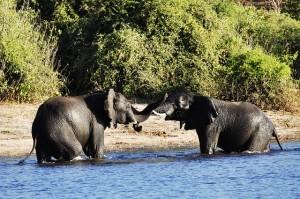 Elefanten während unserer Safari.