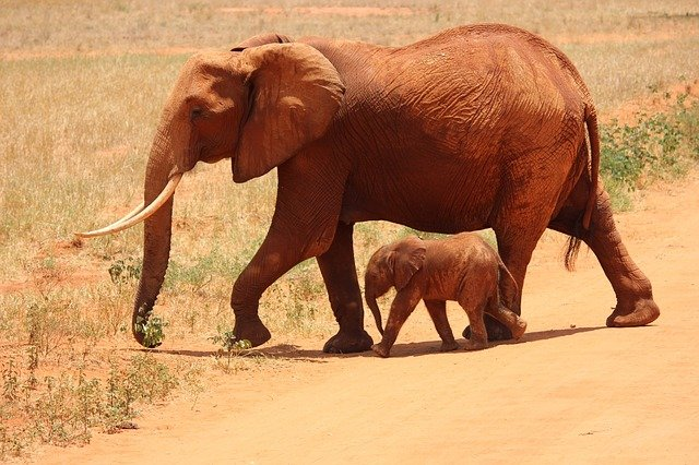 Grandiose Tierwelt in Kenia - ein Traum für Safari-Touristen.