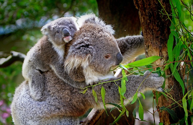 Reisebericht-Australien