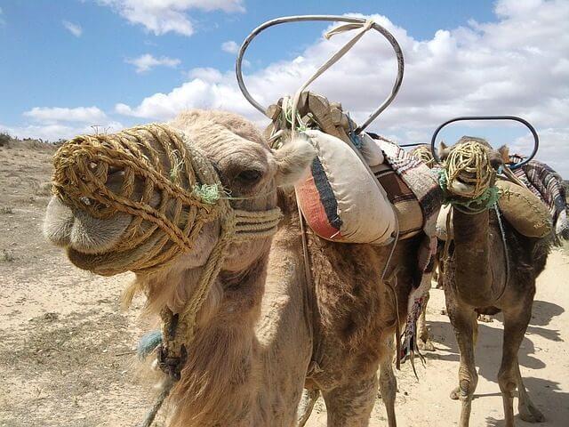 Reisebericht aus dem nordafrikanischen Staat Tunesien.