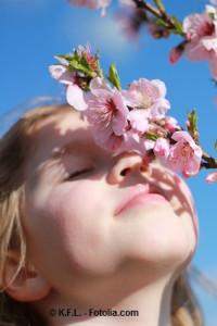 Die Mandelblüte in der Pfalz ist ein Erlebnis für Groß und Klein. © K.F.L. - Fotolia.com