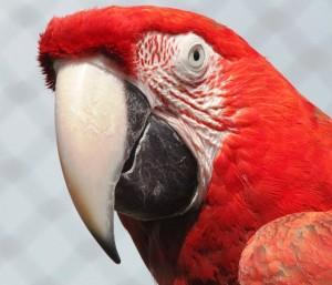 Einer der vielen bunten Papageien im Loro Parque Teneriffa © pixabay.com