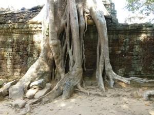 Der Siem Reap Tempel - Kampf mit der Natur. © pixabay.com