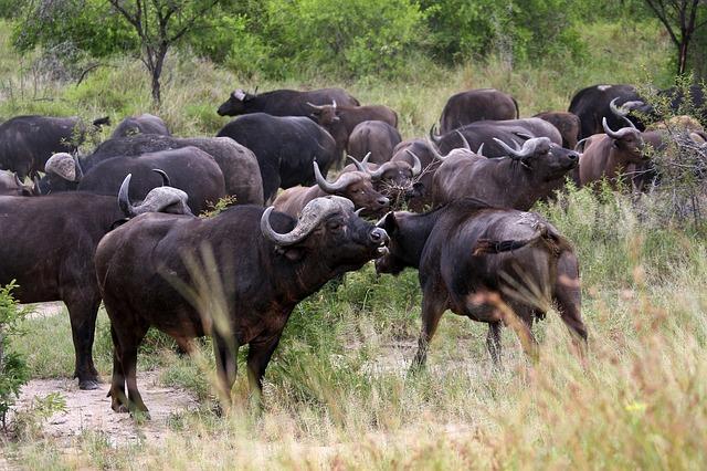 Beliebtes Ausflugsziele während der Südafrika Reise: Der Krüger Nationalpark © pixabay.com