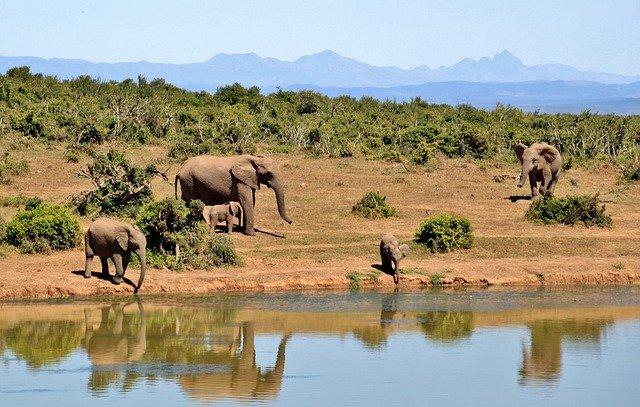 Südafrika Urlaub - Reiseinformationen und Reiseführer © pixabay.com