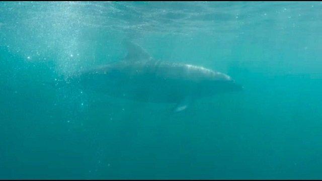 10. Tag: Schwimmen mit Delfinen