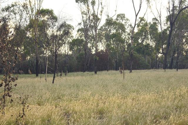 Landschaft und Tierwelt Australien