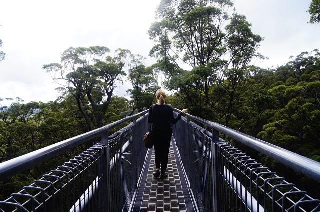 Valley of Giants - Tree Top Walk