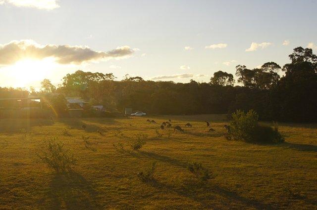 29.05. Pambula Beach Kängurus